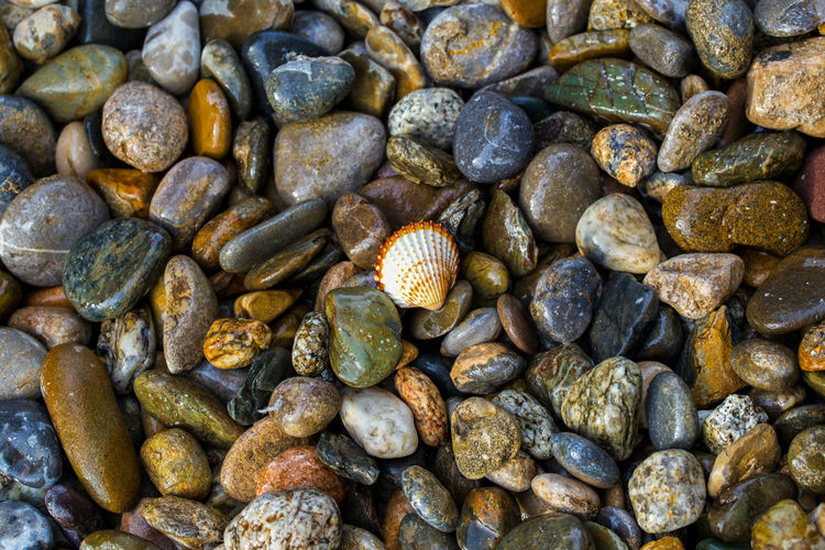 Abstract background with wet multi-colored sea stones and white sea shell Full Frame Large Group Of Objects Backgrounds Solid Rock Pebble Abundance Stone - Object No People Stone Nature Day High Angle View Rock - Object Close-up Directly Above Outdoors Textured  Variation Beach Sea Stones Wet Background Bacground Texture Texture Shell Summer Summertime Vacations My Best Photo