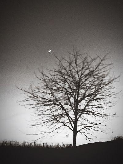 Bare Tree Silhouette Beauty In Nature Scenics EyeEm Ready   first eyeem photo