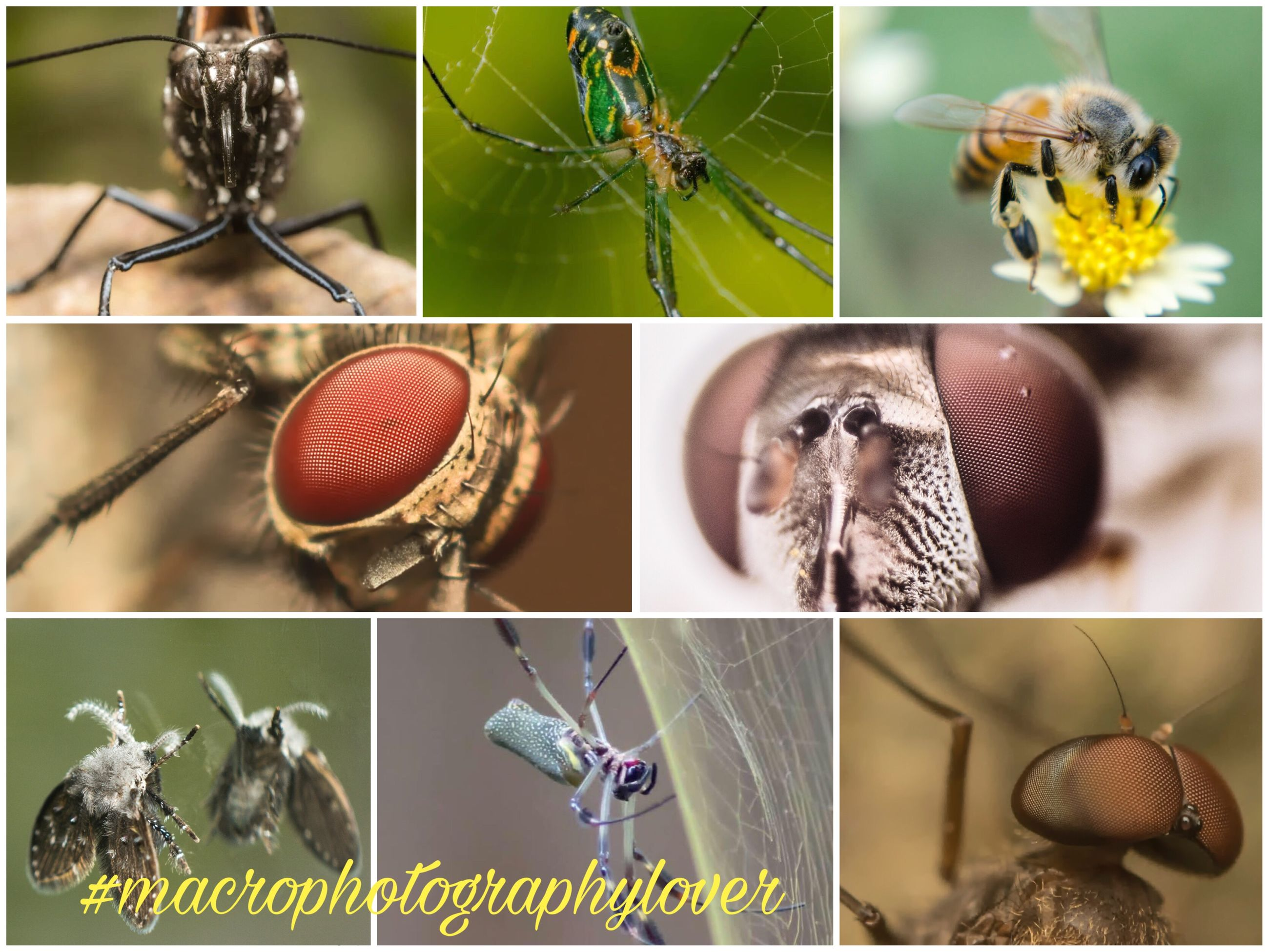 collage, digital composite, close-up, animal themes, focus on foreground, no people, one animal, animals in the wild, freshness, outdoors, multiple image, day