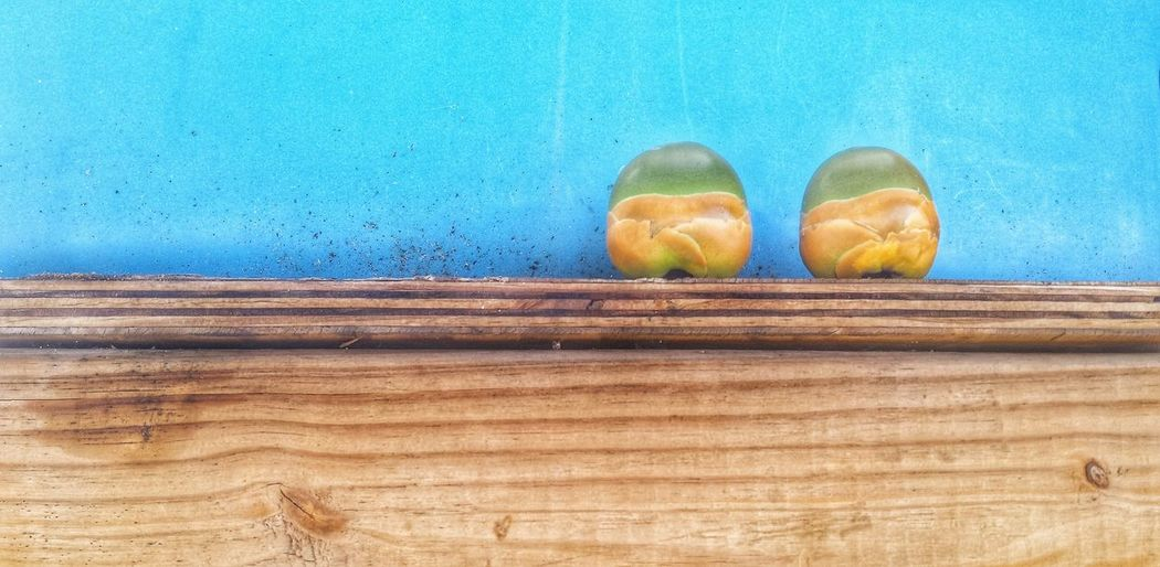 Coconuts on wood against wall