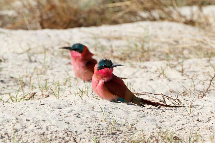 View of bird perching on land