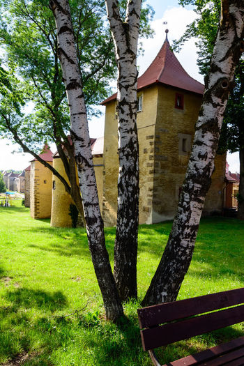 Trees and lawn outside building