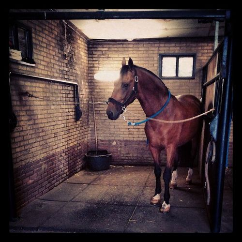 Welovedrivingsport Horse Kwpn Talos almost ready for Aquatrainers http://www.leensoldaat.nl