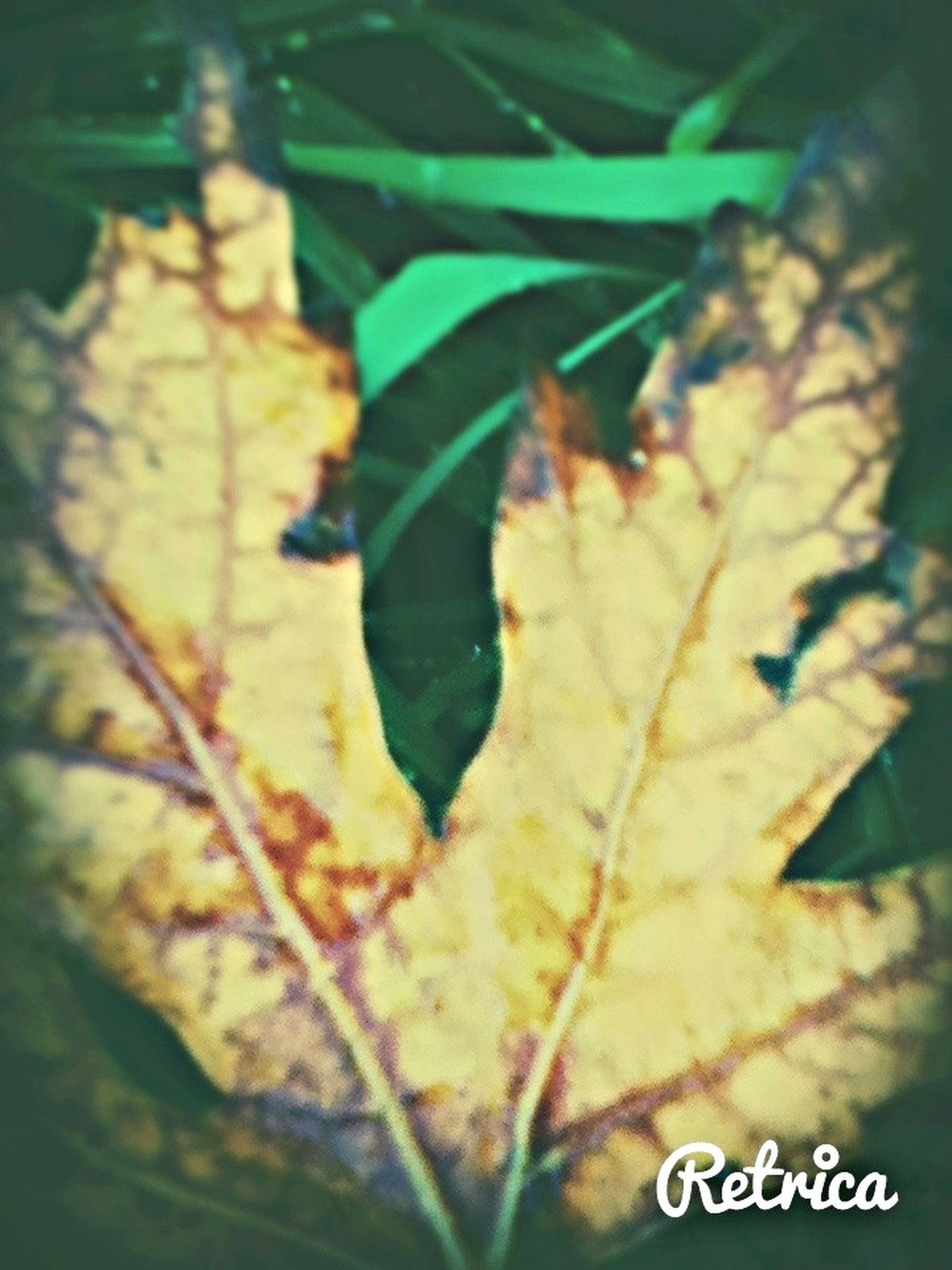 leaf, text, close-up, focus on foreground, growth, nature, western script, communication, outdoors, day, autumn, plant, selective focus, tree, high angle view, leaves, yellow, no people, sunlight, tranquility
