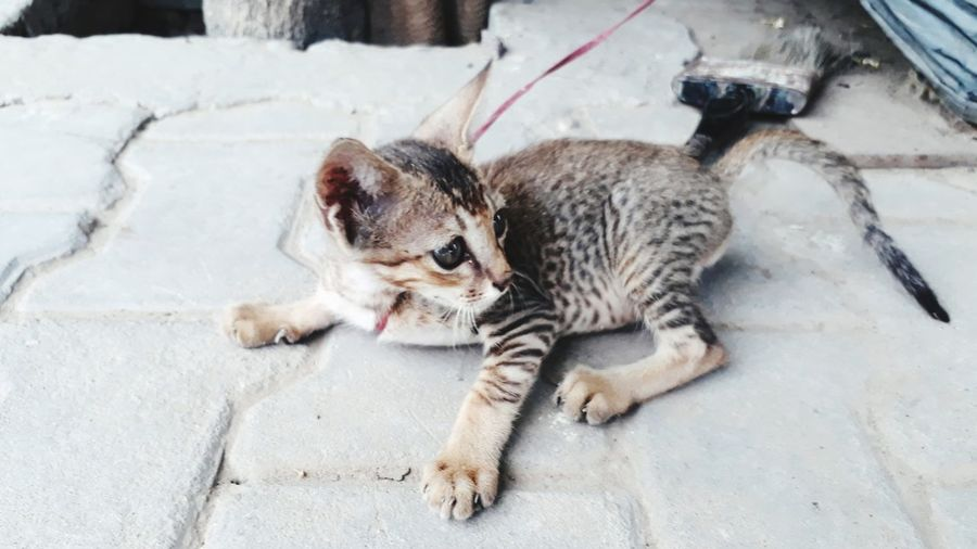 High angle view of a cat on footpath