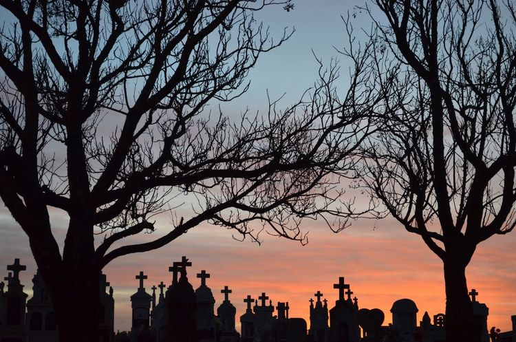 Vidas secas... Taking Photos Hello World Eyeemgallery Photography Nofilter Cemetery Cemetery Photography Cemeterybeauty Drytree Golden Hour Golden Riograndedosul Brasil ♥ Brasil Brazil Sky Sunsettime Sunset