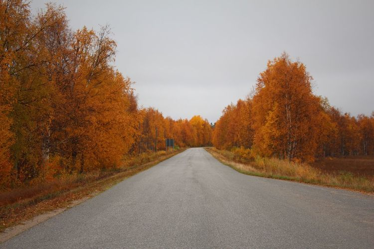 Autumn Autumn Colors Finland Lapland Autumn Beauty In Nature Change Day Diminishing Perspective Forest Landscape Leaf Nature No People Orange Color Outdoors Road Scenics Sky Straight The Way Forward Tranquil Scene Tree Yellow The Great Outdoors - 2018 EyeEm Awards