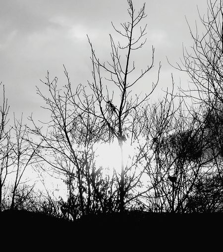 Nature Silhouette Dusk Sunlight No People Tree Sunset Cloud - Sky Sky Outdoors Storm Cloud Beauty In Nature Day Landscape Nature Photography [ Mobile Phone Photography Beauty In Nature Planet Earth Bulgaria Black And White Photography