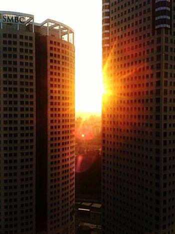 Concrete jungle sunrise Concrete Jungle Sunrise
