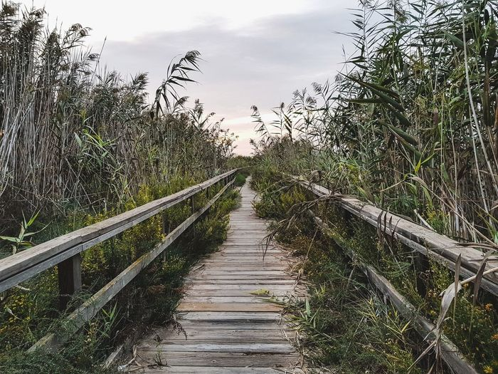 Sea Protected Area SPAIN Summer Spring Autumn Fall Reeds Old Vintage Travel Hiking Nature Beautiful Nature Birdwatching Bird Animal Sunny Sunlight Bog Lake Wooden Path Sky And Clouds Tree Sky Footbridge Bridge Lakeside Aeroplane Explorer Summer Exploratorium