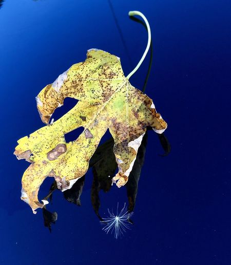 No People Nature Outdoors Sea Life Day Beautiful Leaf Leafs Yellow Close-up Calm Reflection