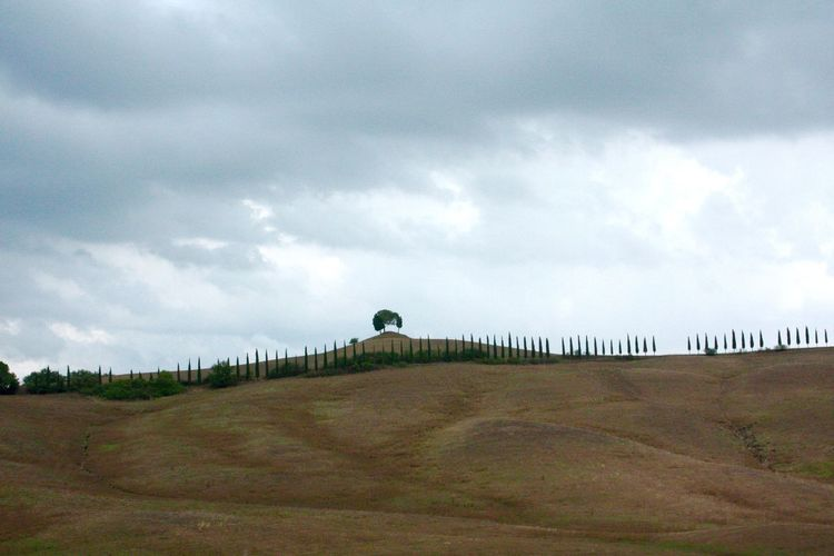 Agricultural Land Agriculture Agriculture Photography Beauty In Nature Cloud - Sky Cloudy Cypress Trees  Day Nature No People Outdoors Sky Tuscany Tuscany Countryside Tuscany Italy Tuscany Landscape Zypressen