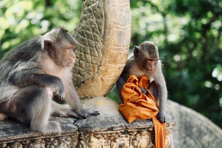 Two monkeys sitting on tree