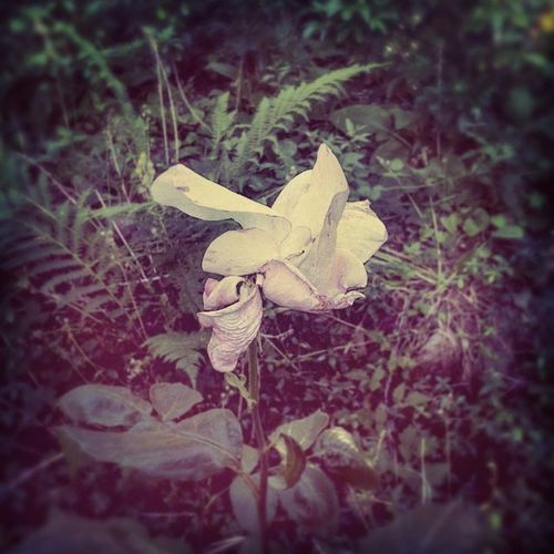 Swan W/ Broken