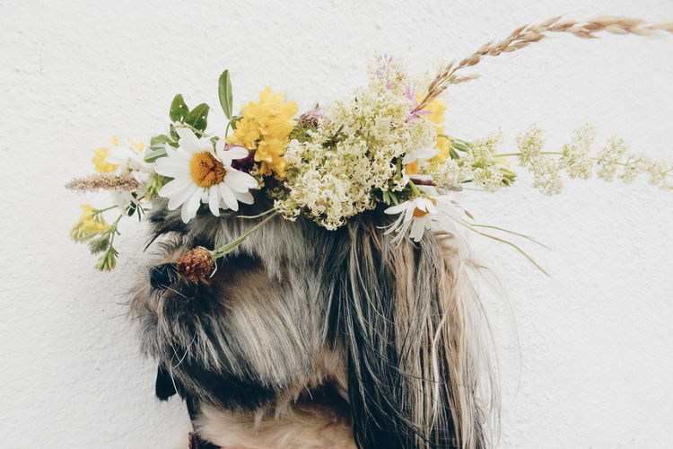 Floral Wreath Profile Face Dogs Dogslife Dog Floral Wild Flowers Wreath Of Flowers Mitsommar Mittsommer Summer Midsummer Summertime Flowers Flower Collection Dogs Of EyeEm Dog Love Showcase June Coulor Of Life Live For The Story