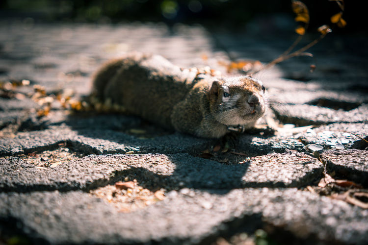 Sun Bathing Selective Focus Rodent Outdoors One Animal Nature Mammal Animal Themes Animal Squirrel Chilling EyeEmNewHere