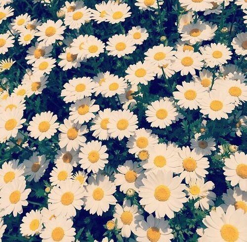 ❤️??❤️?? Flower Popular Photos Moda