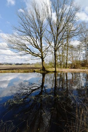 Nature Trees And Water Trees Pond Water Reflections Spring Glacial Melt Channel Remnant Geology in Stiphout Helmond Stiphoutse Bossen