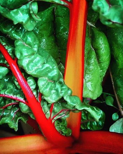 Vegetables Vegetable Vegetablegarden Silverbeet Rainbowbeets Green Orange Backyard Garden Leaveonlyleaves Ss_green_04 9vaga_letters9