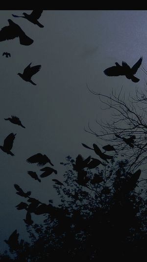 FreeDom..is A ...State oF MinD.... Your Design Story Birds In Flight Birds_collection Birds_n_branches Tree Branches Naturelovers Nature_collection Nature Photography Birds On Motion Nature's Diversities Fine Art Photography