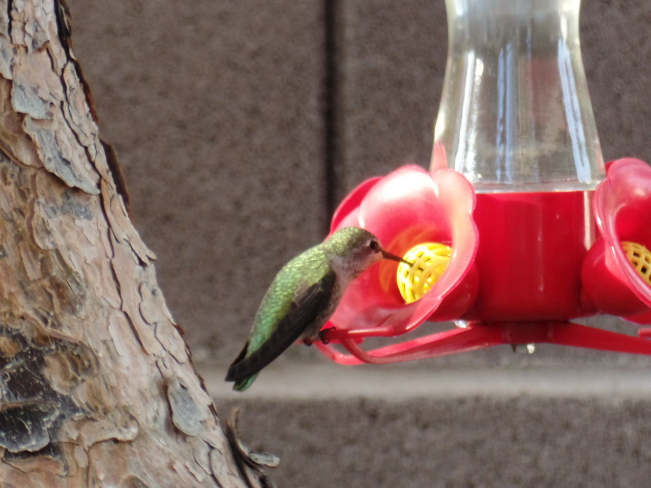 animal themes, animals in the wild, red, one animal, bird, animal wildlife, food, perching, food and drink, no people, day, bird feeder, outdoors, close-up, nature, parrot, freshness