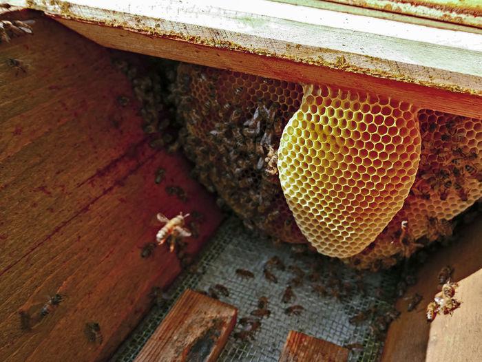 High angle view of bee on wood