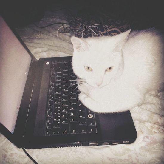 Cute Pets Cute Cats My Life ♥