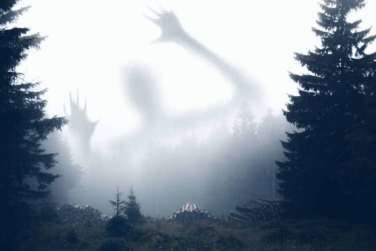 Digital composite image of ghost shadow in fog at forest