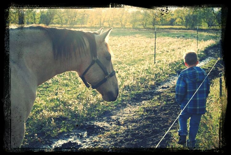 Taking Photos My Photography Horses Kids👣