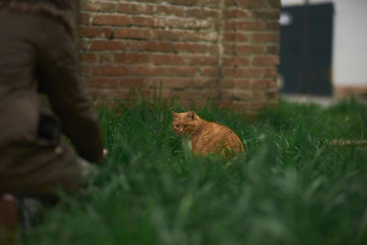 Full frame shot of cat on wall