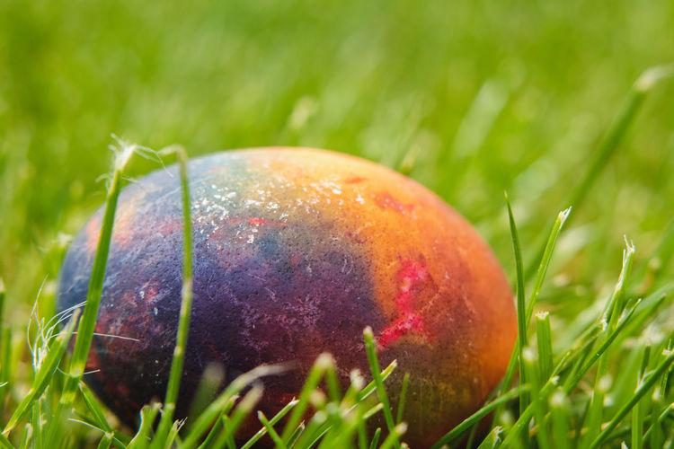 Close-up of apple on field