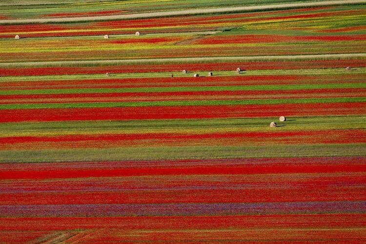 Full frame shot of a field