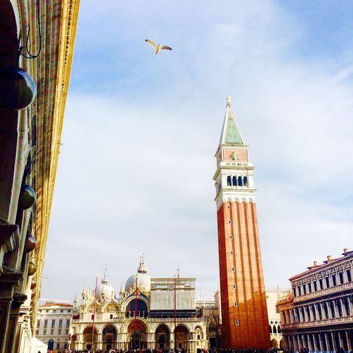 Italy Venice Venezia San Marco Basilica Campanile Sightseeing Seagull Piazza San Marco