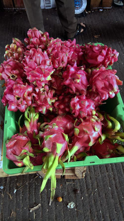Dragon fruit in traditional markets Abundance Arrangement Beauty In Nature Bouquet Buahnaga Close-up Day Dragonfruit Florist Flower Flower Head Flower Market Flower Shop For Sale Fragility Freshness Large Group Of Objects Market Nature No People Outdoors Petal Pink Color Retail  Variation