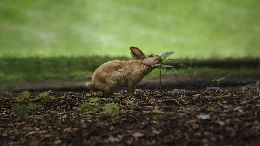 Rabbit Animal