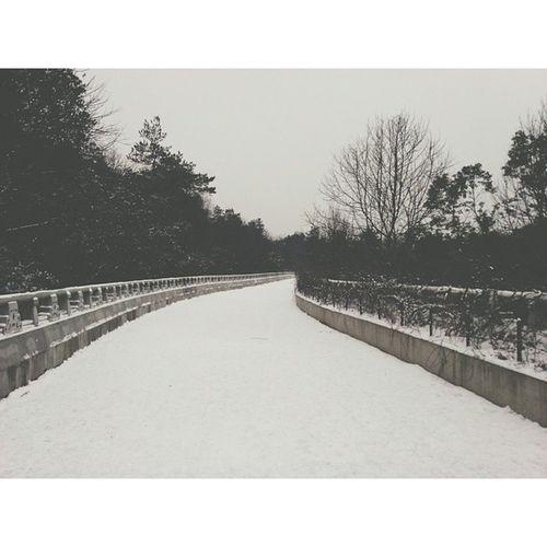 岳麓山的积雪很厚,让我想起了几年前的冰灾。 岳麓山 长沙 Road Snow vsco vscocam 湖南 changsha china