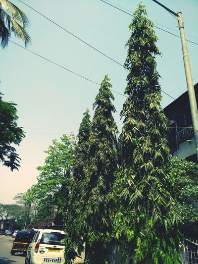 Environmental Conservation Trees And Sky Surrounded By Nature Hanging Out Check This Out Taking Photos Hello World Enjoying Life Society Relaxing Walking Around Clicking Photos On The Way