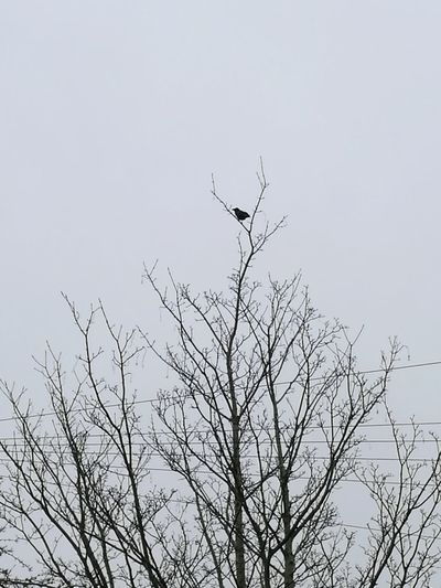 Space For Text Silhouette Lonely Alone Single Bird Tree Branch Bare Tree Winter