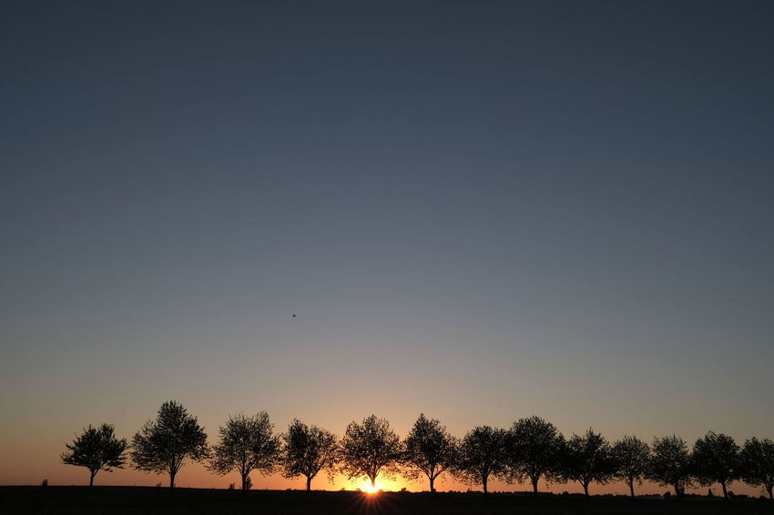 Beauty In Nature Clear Sky Copy Space Environment Field Idyllic Land Landscape Nature No People Non-urban Scene Outdoors Plant Scenics - Nature Silhouette Sky Sunset Tranquil Scene Tranquility Tree