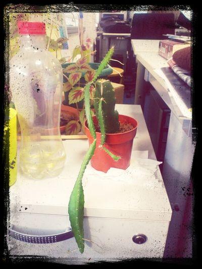 Office Plants Mutant Plant