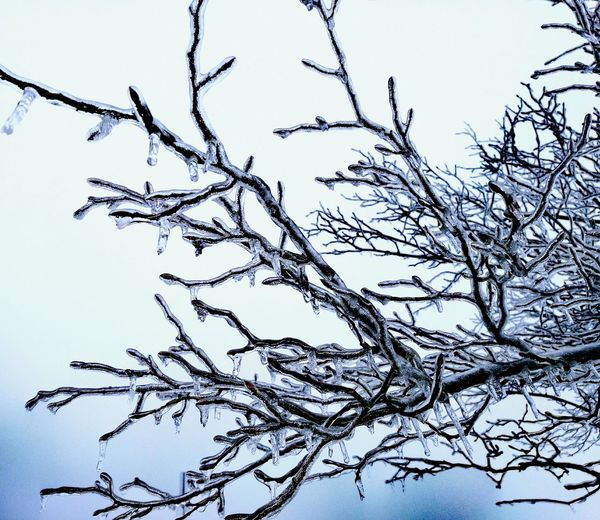 Branch Nature Tree Low Angle View No People Outdoors Day Beauty In Nature Sky Close-up Ice Winter Winter Wonderland