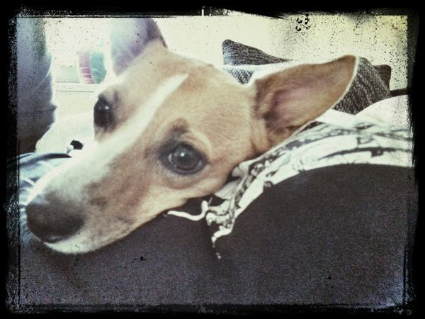 Amy Dog