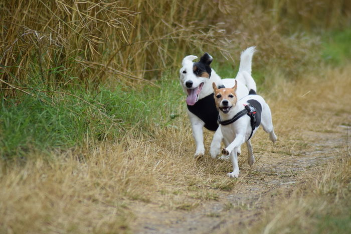 Animal Themes Day Dog Dog Love Dogs In Action Dogs Life Dogs Of EyeEm Dogsinnature Dogslife Domestic Animals Handsomedog Jack Russell Jack Russell Terrier Mammal Nature No People Outdoors