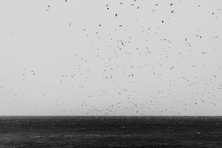 birds Sky Horizon Water Horizon Over Water Bird Sea Scenics - Nature Flying Large Group Of Animals Flock Of Birds Group Of Animals Tranquil Scene No People Nature Animal Animal Wildlife Outdoors Nature Nature_collection Seagull Birds EyeEmNewHere EyeEm Best Shots EyeEm Nature Lover EyeEm Gallery