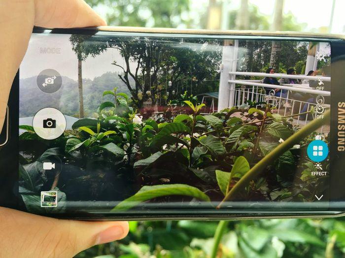 EyeEm Green Samsung Galaxy S6 Edge S6edgephotography Iphone6plus Iphonephotography Samsungphotography Apple Photography Plants Photoonphoto
