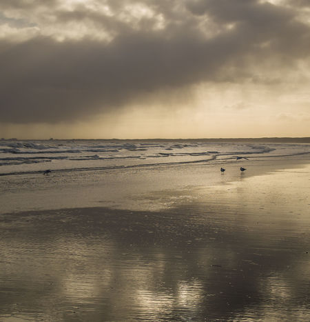 Cloud Reflections Flights Bird And Beach Bird And Beach Scape Incoming Storm Incoming Weather Nature Water