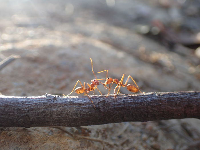 Ants Life Close-up Focus On Foreground Insect Theme Nature