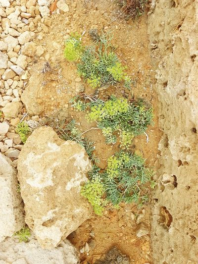 Grass Summer Shore Dunes Dune Plants Stone Stones Stones And Plants Stones & Grass Stones & Sand Green Sand Brown Green Brown Backgrounds Sand Beach Full Frame Textured  High Angle View Close-up Ground Soil Stone Tile Young Plant