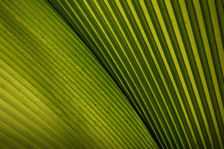 Untitled Abstract Abstract Backgrounds Backgrounds Beauty In Nature Brightly Lit Close-up Full Frame Green Color Leaf Leaves Natural Pattern Nature No People Outdoors Palm Leaf Palm Tree Pattern Plant Part Striped Textured  Textured Effect Tropical Climate Yellow