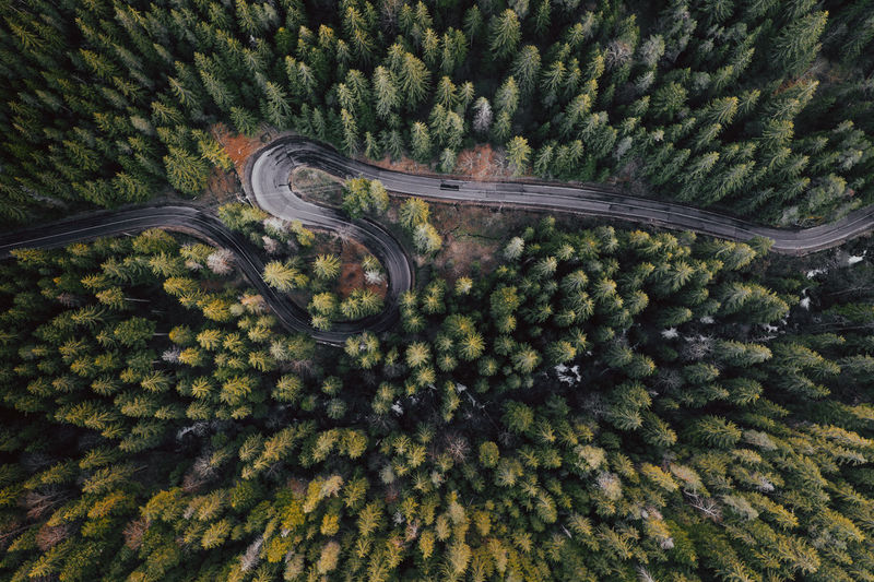 Bicaz gorge No People Nature Scenics - Nature Beauty In Nature Outdoors Windy Road Curvy Road Drone  Drone Photography Transylvania Romania Lake Gorgeous Red Lake Trees Pines Above High Angle View Landscape Destination Traveling Tree Day